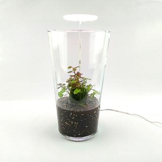Wabi Kusa Set mit bepflanzen Moosball -