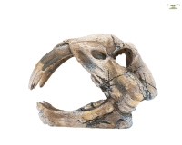 Dinoskelett Kopf - Aquarium Versteckplatz