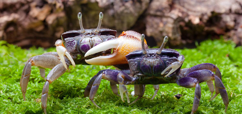 terrarium krabben
