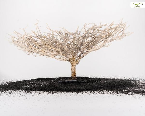 Crusta Baum auf Schiefer - Größe L