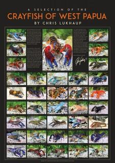 Shrimp King - XXL Krebs Poster - Chris Lukhaup