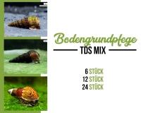 Turmdeckelschnecken mix - Bodenpflege