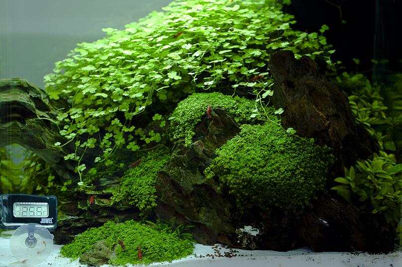 aquarium_sakura