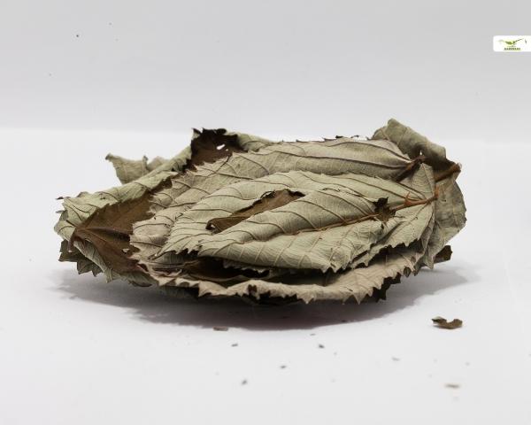 Brombeer Blätter, 20 Blätter