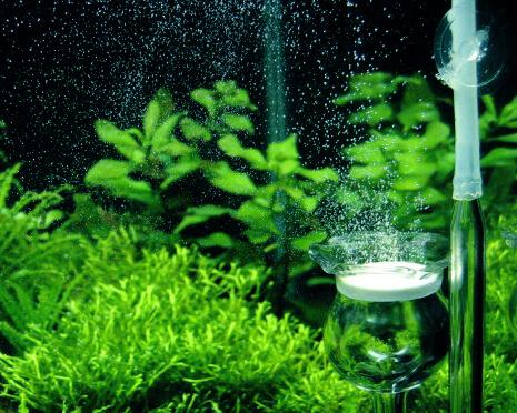co2 d ngung f rs aquarium garnelen onlineshop. Black Bedroom Furniture Sets. Home Design Ideas