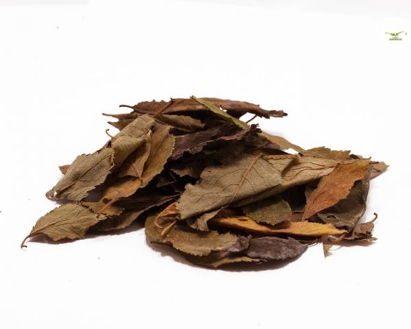 Pflaumen Blätter, 20 Blätter