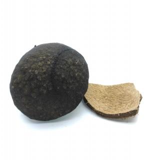 Soil Ball roh mit Kokosscherbe zum bepflanzen