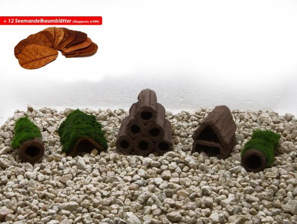 Versteckplätze Set Up für Garnelen + 12 x Seemandelbaumblätter