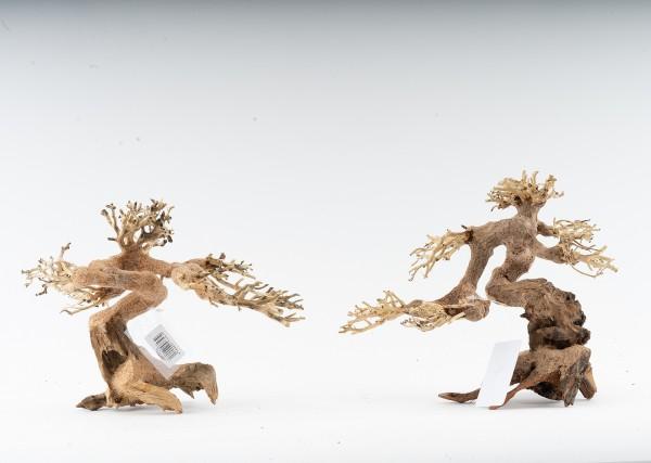 Wald Bonsai - vers. Größen