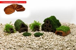 Moosparadies Set Up für Garnelen + 12 x Seemandelbaumblätter