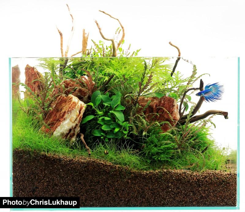 aquarium5698faa18d6ff