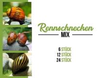 Rennschnecken mix - Algenvernichter
