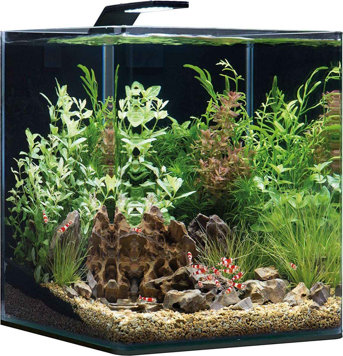 парке нано аквариум картинки этой роли, приглашения