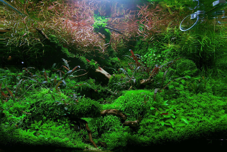 dennerle nano cube aquael shrimp tanks kaufen garnelen onlineshop. Black Bedroom Furniture Sets. Home Design Ideas