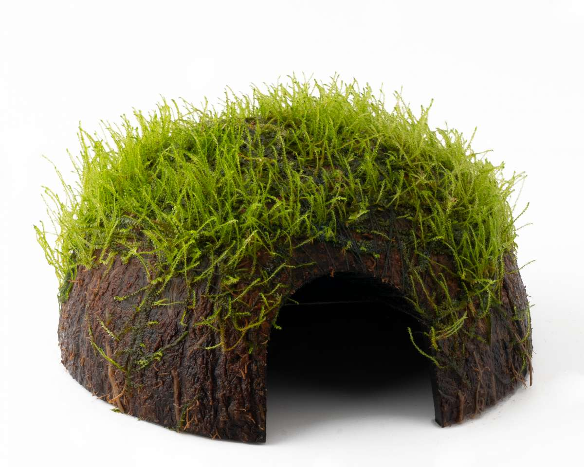 Kokosnuss Höhle