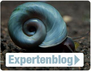 Expertenblog